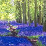 Shinrin Yoku Forest Breathing Sanctuary Walk